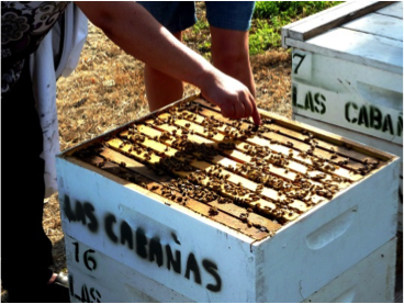 BEES and Almonds Story
